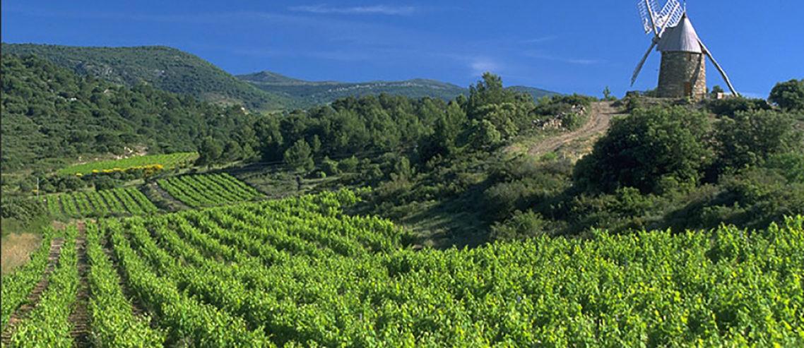Wijnvelden Minervois